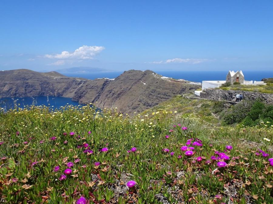 Wildflowers and Caldera views, Santorini