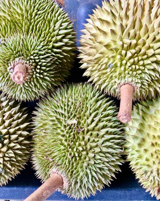 Spikey Durian Fruits