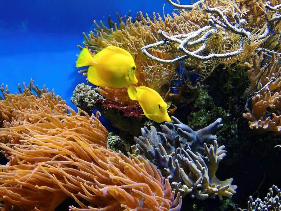 Coral and yellow fish