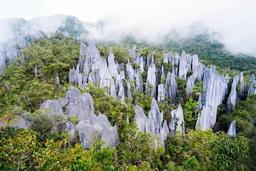 mulu national park pinnacles. reasons to visit Malaysia