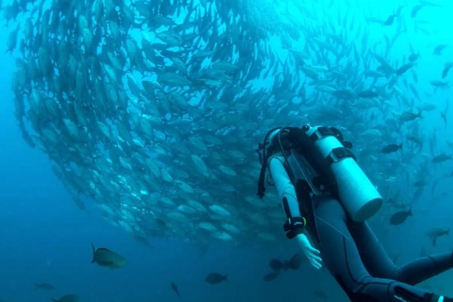 fish surrounding a scuba diver-reasons to visit Malaysia