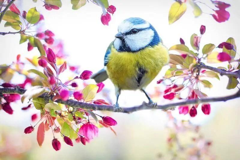 yellow bird, spring flowers