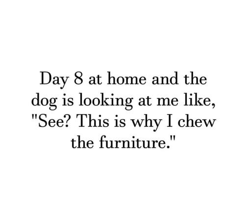 chew furniture meme