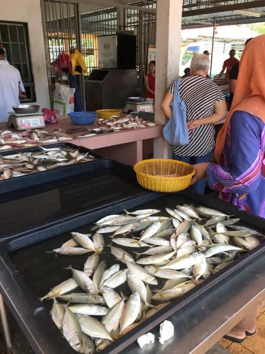 daily fish at the market