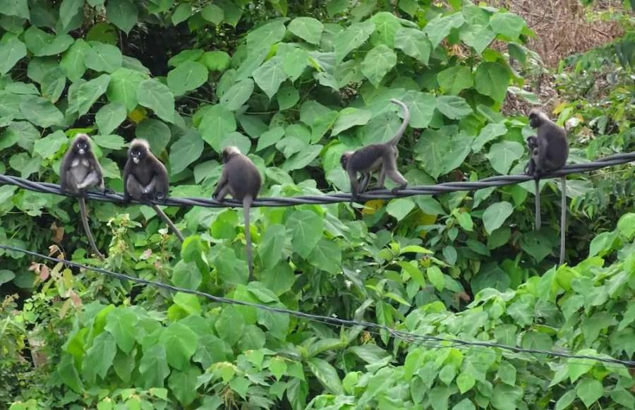 monkeys on a wire