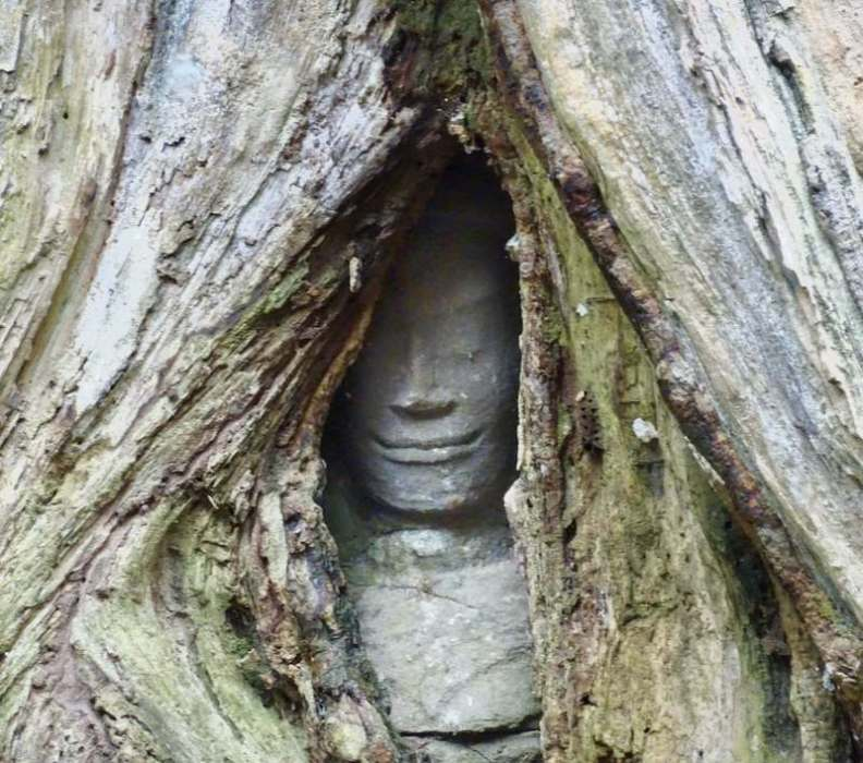 stone face peeking out of tree