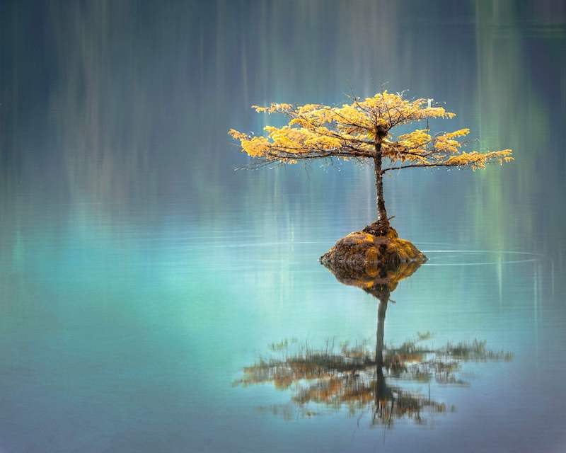 lonely tree: 5 stages of culture shock