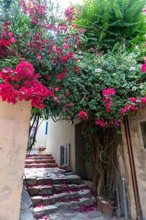 flowers in Greek alleyway