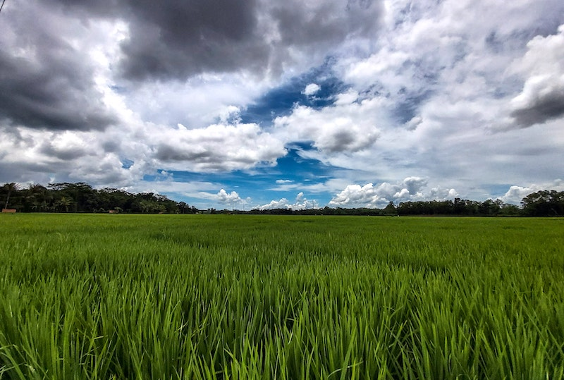 rice paddies: great for a Malaysia short getaway