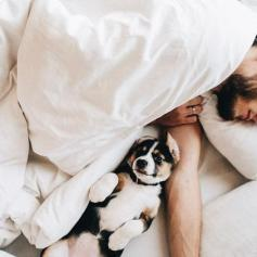 dog-and-man-in-bed-sleeping