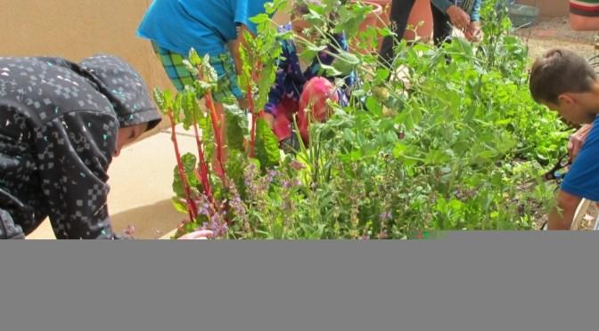 Corrales Elementary School Garden – Sandoval County Master Gardeners
