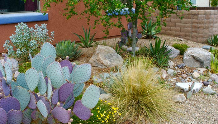 Gardening in the Desert - The key is managing evaporation!