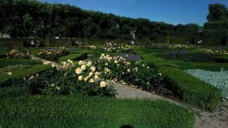Koningspark-rozentuin 2
