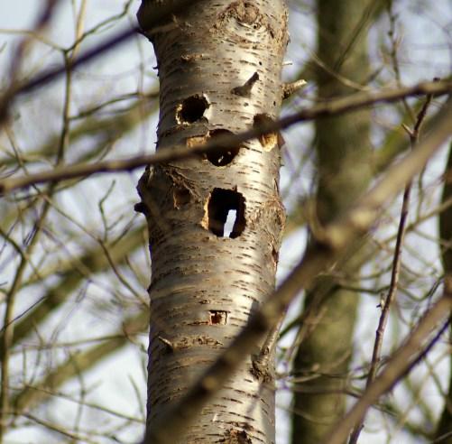 boom bleek te slank