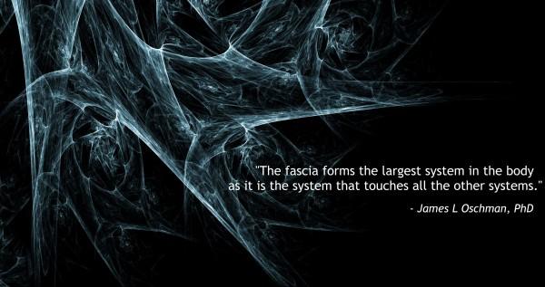 fascia, het grootste systeem in het lichaam