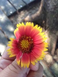 Wüstenblume oder so