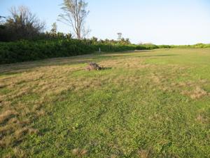 The runway … avec Giant AldabraTortoise