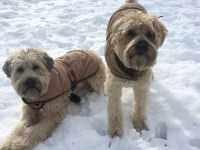 Should your dog wear a winter coat? | Sandra's Town & Country