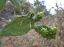 Cactus, La Coposa, Edo. Lara 2