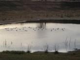 Laguna de patos, Finca La Divina Pastora, La Coposa, Edo. Lara