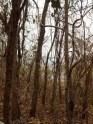 Burro negro, zona boscosa vía refugio de dantas