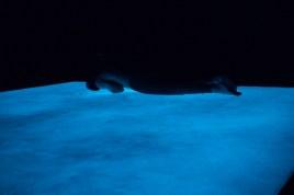PAUL CHAMBERS / COLLECTIF CHA PHASES CHROMATIQUES : PHOSPHOS La Chapelle Scènes Contemporaines 3700 rue Saint-DominiqueMontréal Qc, Canada H2X 2X7 17 & 18 décembre 2020 PHOSPHOS est une installation lumineuse qui questionne comment on perçoit la lu