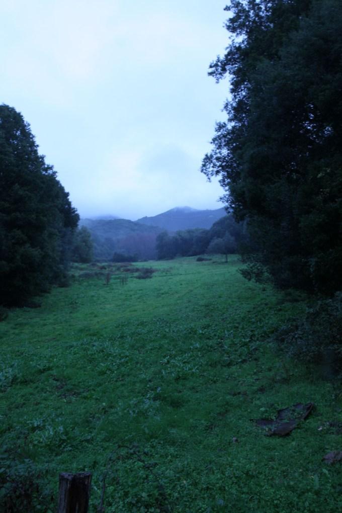 Une prairie au matin