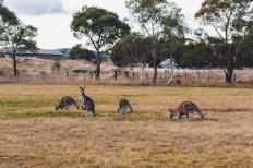 Road Trips Australia-2