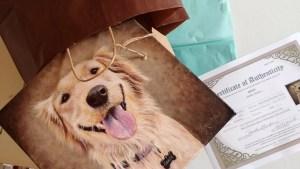 photo realistic pet portraits