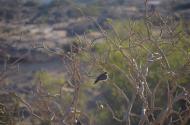 Omana - putnu valsts