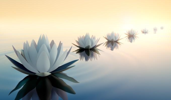 Karmique lotus réincarnation
