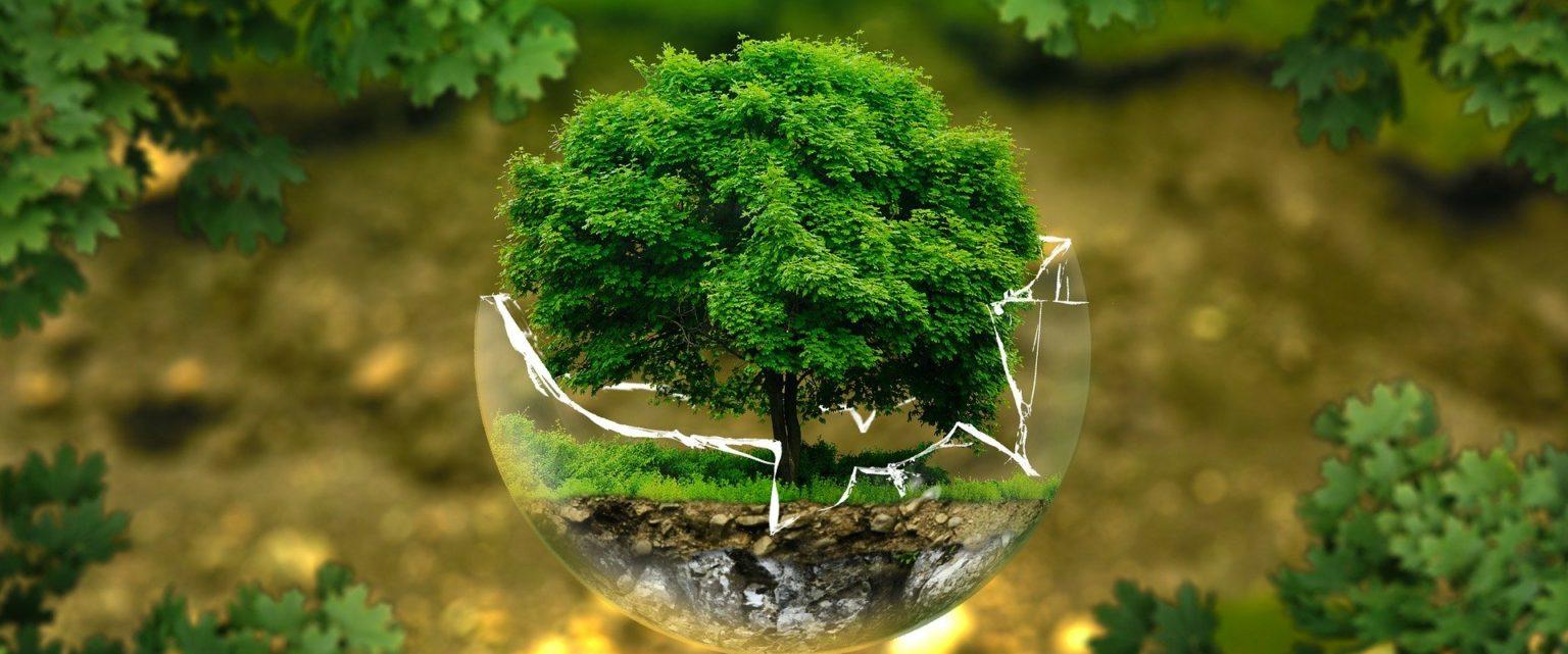 Ecosia: raggiunti i 100 milioni di alberi piantati!