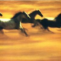 Mosso e colorato - Ernst Haas