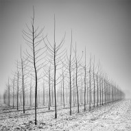 tree-landscapes-by-pierre-pellegrini-2-600x600