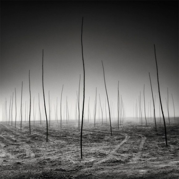 tree-landscapes-by-pierre-pellegrini-5-600x600