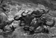 Black-and-White-photography-Tomasz-Gudzowaty-14