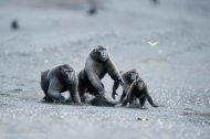 wildlifephotographer