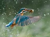 birds_928