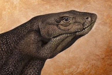 Komodo-Dragon-509x340