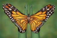 Monarch-Buttefly-mail-509x340