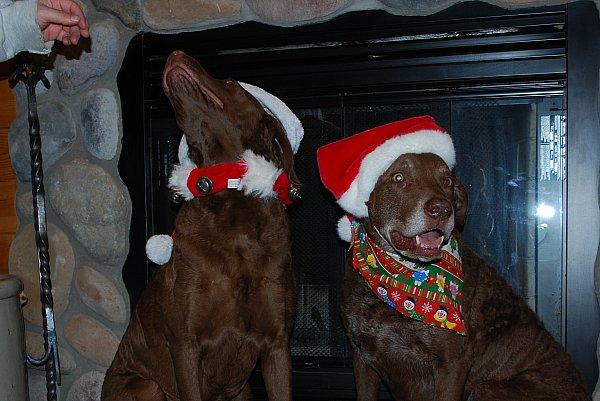 I think I see Santa coming down the chimney.