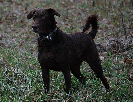 Riley, Nellie's 09 puppy.