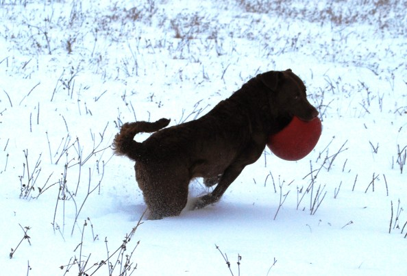 Glory and her red ball