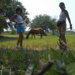 wild horse and us
