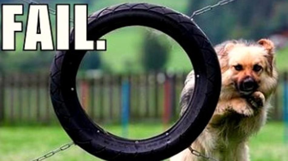 dog trying to jump through tire PR Fail