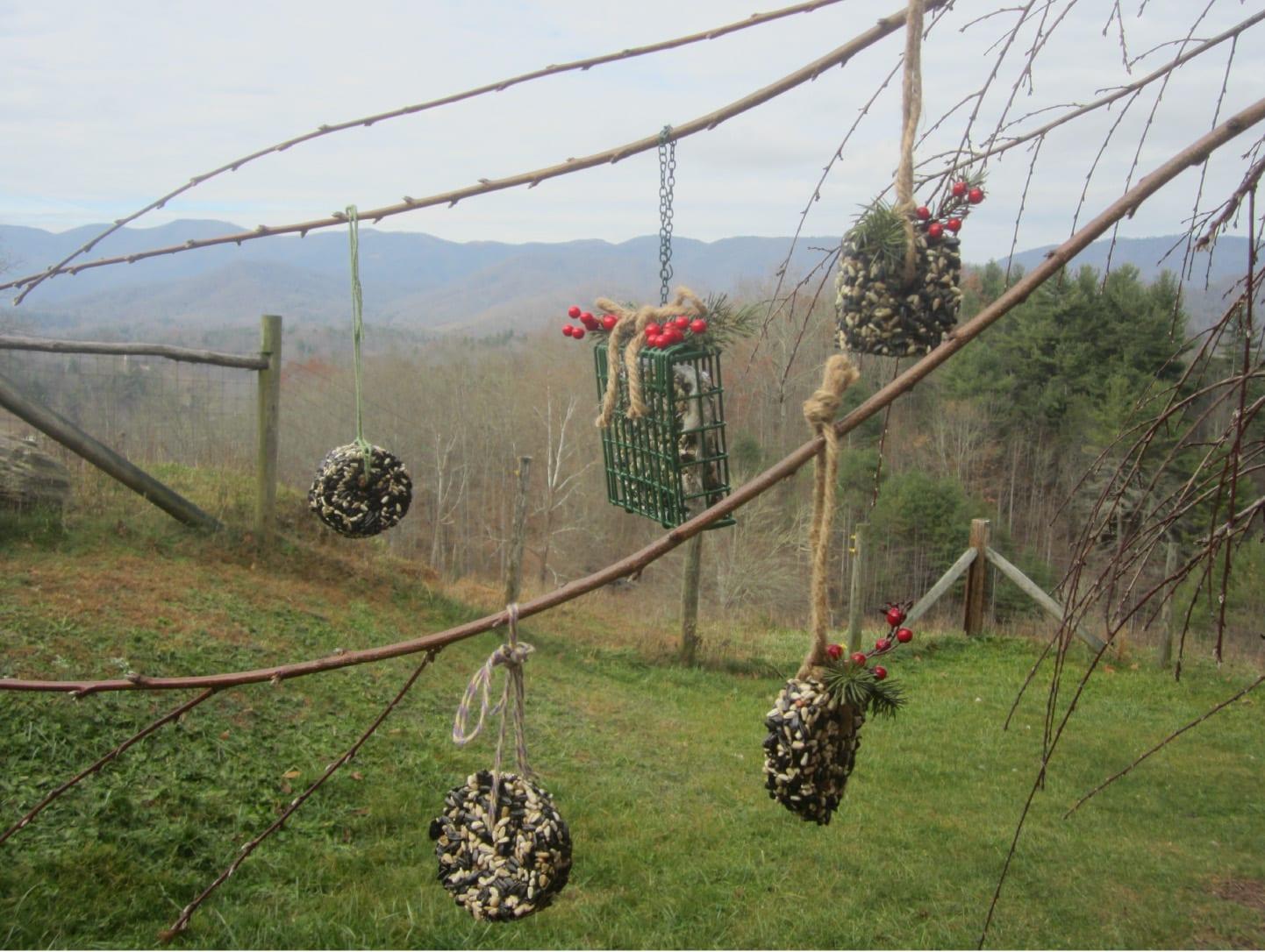 Mountain Lady Farm Project – Bird Feed Cakes