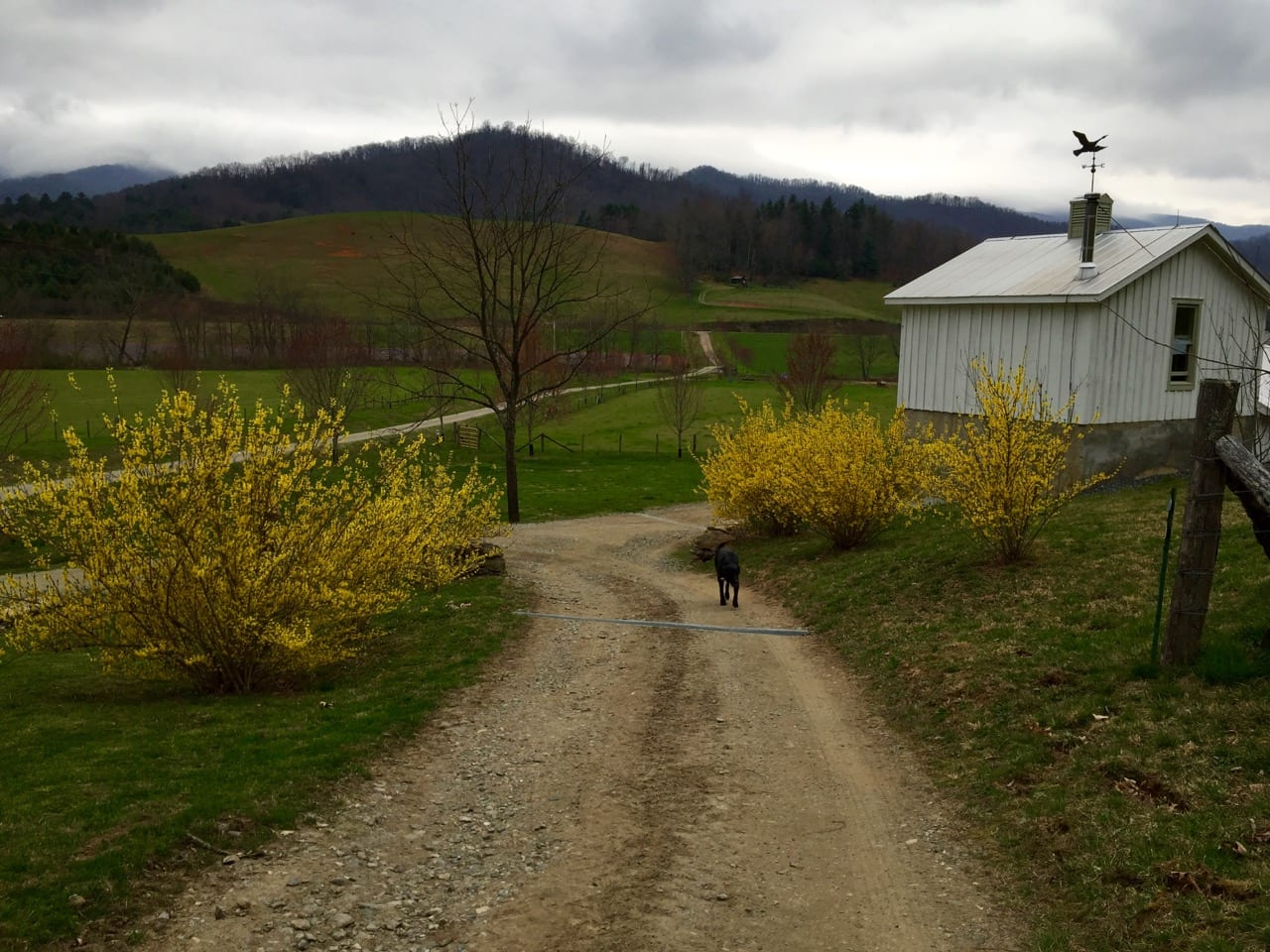 farm photo with bird flying and dog walking on road