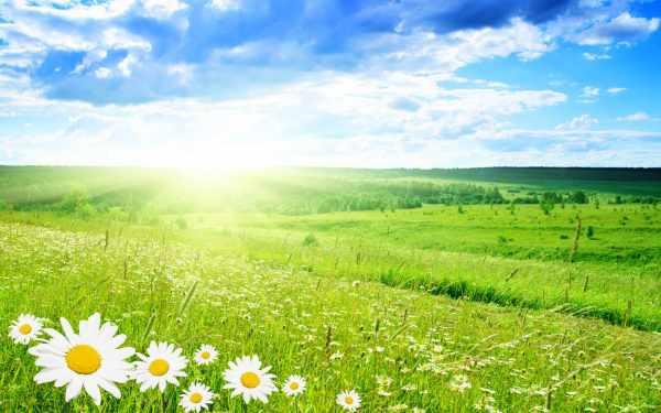6895404-green-landscape health