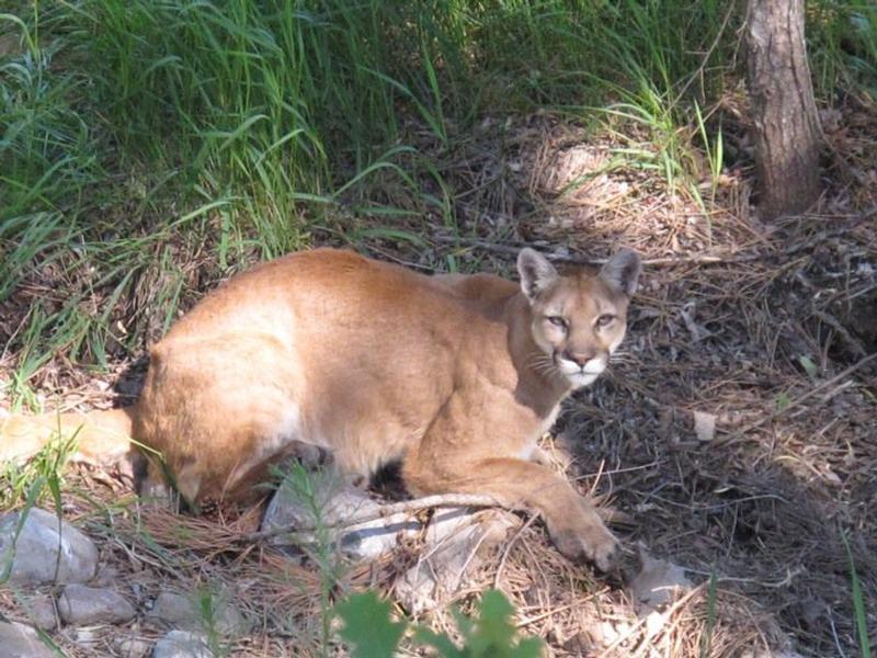 mount carroll cougars dating site Iowa milfs - dating for horny  burlington carroll cedar falls cedar  mars maquoketa marion marshalltown mason city mount pleasant muscatine.