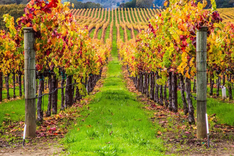 Best San Francisco Wine Tours